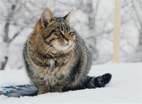 Katzen Halten Ausstattung by Freig 228 Nger Im Winter Tipps Zur Katzenpflege Zooroyal