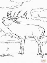 Deer Coloring Printable Mule Buck European Supercoloring Colouring Western Adult Wood Animal Arrows Fighting Library Popular Carving Animals Burning Coloringhome sketch template