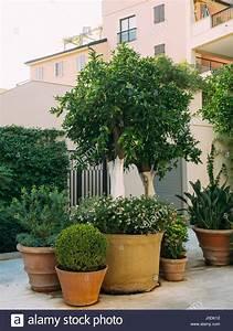 Baum Im Topf : a tree in a pot small trees in clay pots stock photo 137983246 alamy ~ A.2002-acura-tl-radio.info Haus und Dekorationen