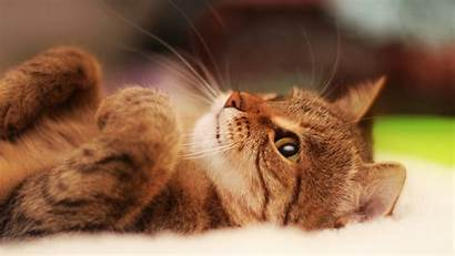 Cat Cool Backgrounds Lying Windows Wallpapertag