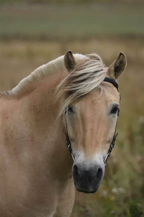 horse breeds irish fjord norwegian cob existed didn know before today