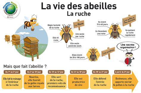 abeilles 224 miel