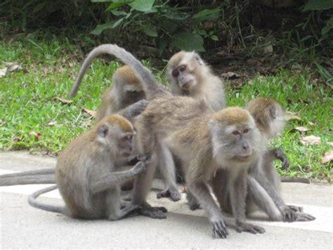 Small Wild Monkeys