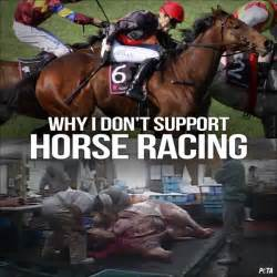 peta into horses glue turned food race dog support pm don jun