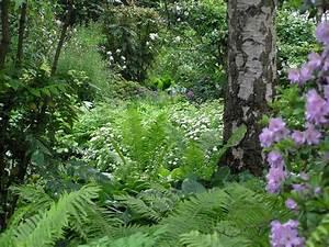 Pflanzen Für Schattengarten : 56 besten schattengarten bilder auf pinterest farne pflegeleichte zimmerpflanzen und sucht ~ Sanjose-hotels-ca.com Haus und Dekorationen