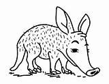 Coloring Aardvark Pages Museprintables sketch template