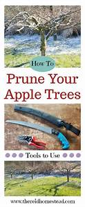 Tips On How To Prune Apple Trees On The Homestead  With