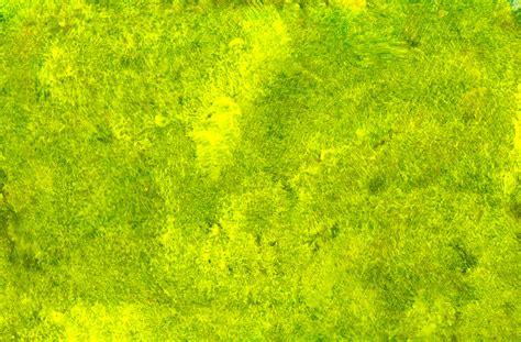 Yellowgreen Paint Texture (jpg) Onlygfxcom