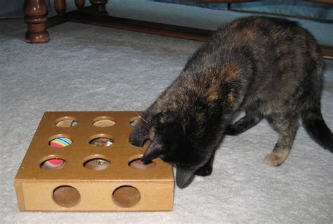 interactive puzzle toys  smart cats