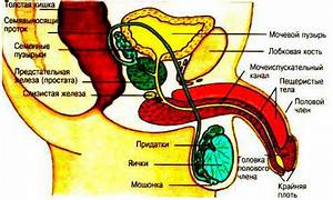 Сафоцид помогает от простатита