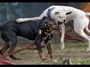 Aggressiver Rottweiler spielt Ego-Shooter [CoD MW3] - YouTube