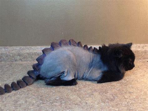 dragon haircut  cats thinkgeek