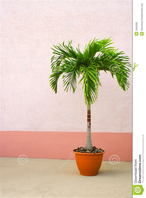potted palm tree stock photo image 1845330