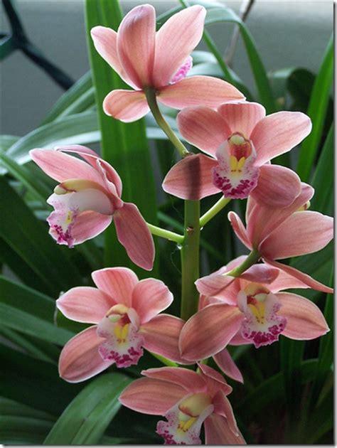 terre entretien des orchid 233 es