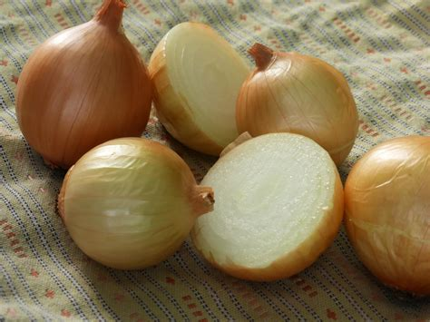 texas early grano dry bulb onion   southern exposure
