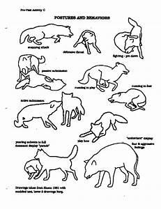 Arctic Wolf Diagram