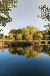 Lake, And, Yellow, And, Orange, Fall, Foliage, Trees, Scene, With