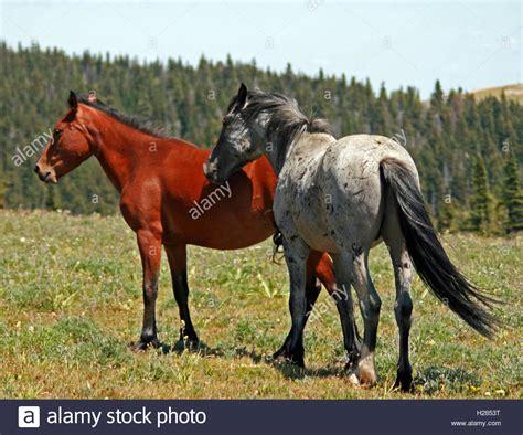 dun colored dun colored stock photos dun colored stock images alamy