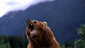 Worst December Stock Market  Dow Falls As Bear Looms