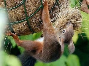 Was Tun Gegen Spatzen Auf Dem Balkon : eichh rnchen nest auf dem balkon was tun ~ Markanthonyermac.com Haus und Dekorationen