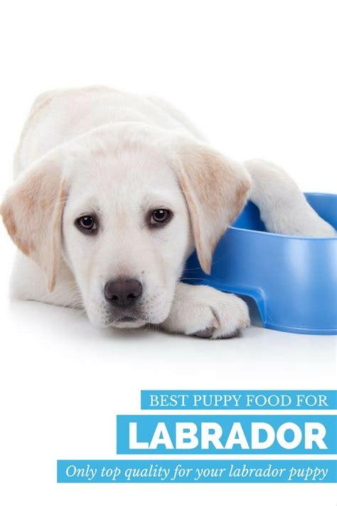 retriever canned dog food reviews food