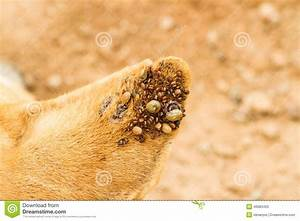 Dog Ticks Stock Photo - Image: 46983493