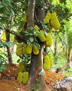 Hope for Madagascar: Jack Fruit? Lychee? Kumquats?