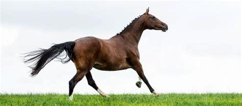 Darmflora Aufbauen Pferd