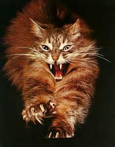 cat photo album fierce cat display image