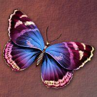 Kleiner Schmetterling Tattoo : pin von birgit ke ler auf schmetterling pinterest libellen schmetterling tattoo und insekten ~ Frokenaadalensverden.com Haus und Dekorationen