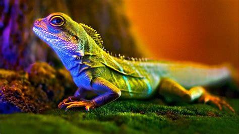 macro photography lizard wallpaper wallpaperscom