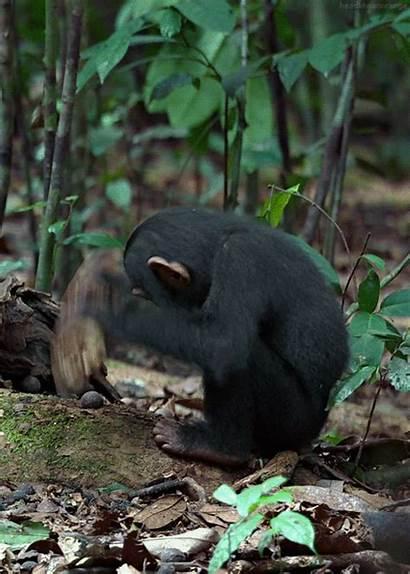 Animals Animated Animal Gifs Monkey Wild Amazing