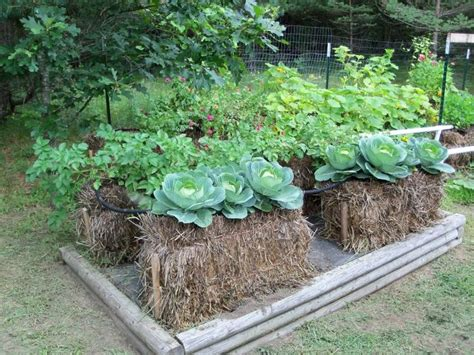 Where To Buy Straw Bales For Gardening by Straw Bale Gardens Http Strawbalegardens Pictures