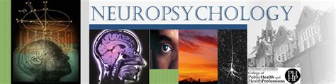 Neuropsychology Graduate Programs In Texas  Download Free. Client Relations Management Mr Office Space. Information Technology Consulting Firms. Supplemental Insurance Companies. Difference Between Hypoglycemia And Diabetes. Performance Review Survey Raise Rite Concrete. Filter Emails In Outlook Mileage Credit Cards. Mobile Whiteboard On Wheels Indiana Tech Phd. Air Conditioner 1 5 Ton Payday Loan Solutions
