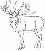 Elk Coloring Pages Animals Animal Sheets Sketch Template sketch template