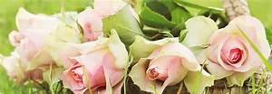Gartenarbeit Im August : rosen und lavendel schneiden generation 35 gartenarbeit ~ Lizthompson.info Haus und Dekorationen