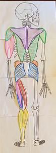Anatomy Practicals