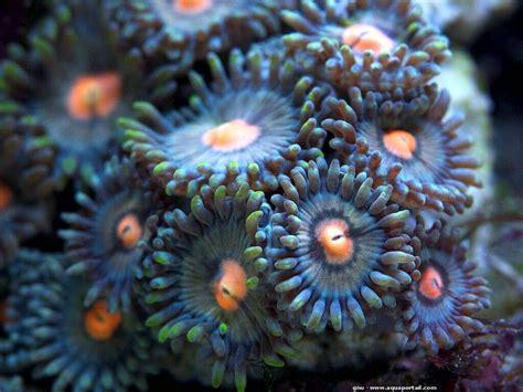 an 233 de mer biologie aquarium reproduction
