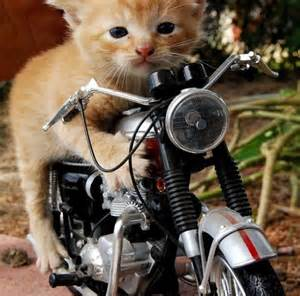 cat cing picture cat bike racing pak101