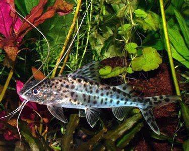 petland aquatics   fish   page