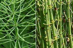Wildkruter Und Heilpflanzen Bestimmen