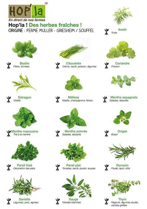plantes aromatiques cuisine herbes pour des grillades des salades ou des sauces