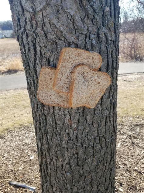 community  stapling bread  trees