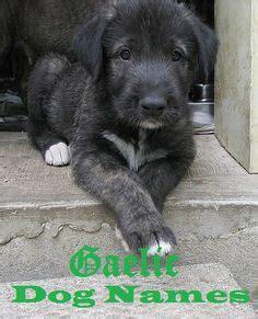 images  dog names  pinterest dog names