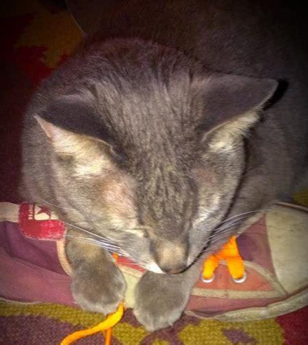 ways    cat  stop biting  catster