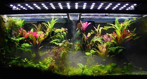 vivarium fog forest youtube