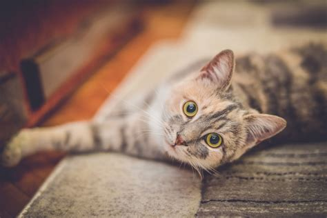 Yucca Palme » Giftig Für Katzen? (palmlilie