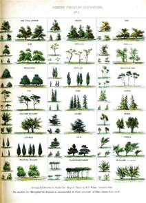best 25 tree identification ideas on tree planting shrubs and identification des
