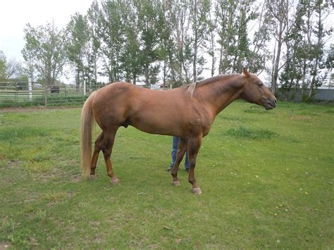 horse muscular very him wind songs neighbor petted talked easily