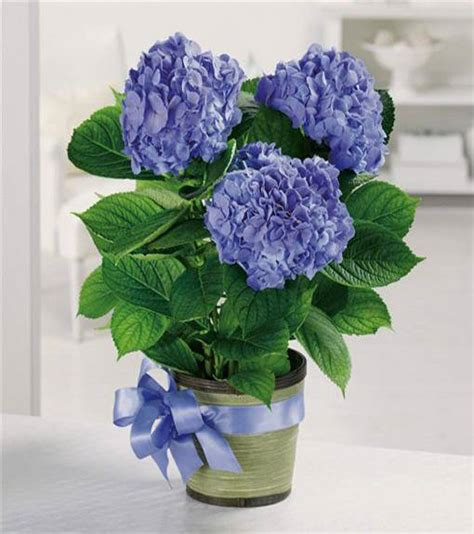 hydrangea flower arrangements  interior decorating